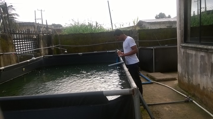 How to start up laundry soap making business in nigeria for Fish farming business