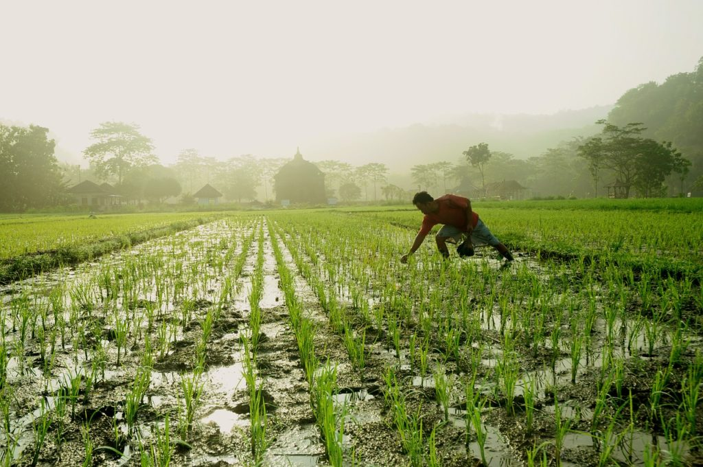 Is Starting Up a Rice Farming Business In Nigeria Really That Lucrative?