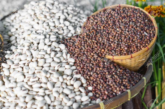 starting a beans farming business in nigeria