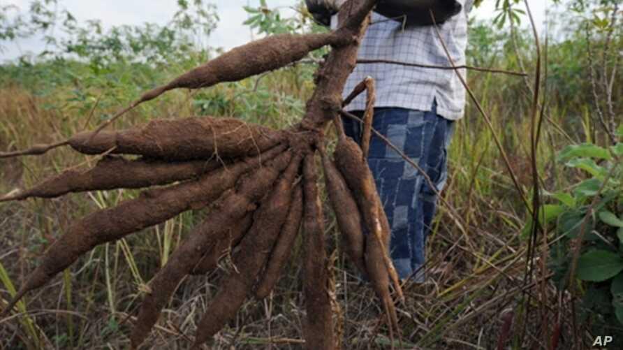 starting a cassava farming business in nigeria